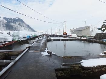 高野養魚場 いけすのすぐ隣には魚野川が流れている