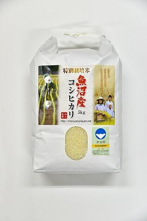 森山農園特別栽培米魚沼産コシヒカリ